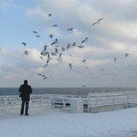 Море,чайки,человек :: Алина