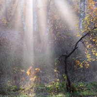 Солнца лучи :: Nataliya Barinova