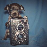юный фотограф :: Михаил Манеев