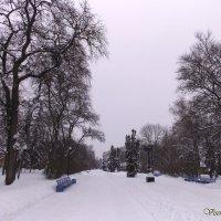 Зимний парк :: Виктория Стукалина