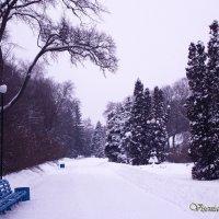 Зима в городском парке :: Виктория Стукалина