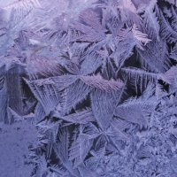 Цветы от Деда-Мороза :: Святец Вячеслав