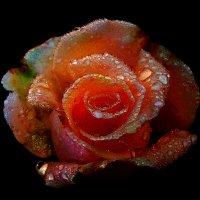 ночные цветы 4 :: Владимир Хатмулин