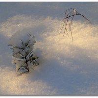 Зима :: Вячеслав Минаев