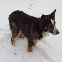 Учусь снимать собаку, которая не любит сниматься :: Андрей Лукьянов