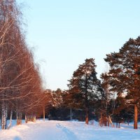 Дорога в лес :: Александр Подгорный