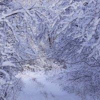 Прогулка по зимнему лесу :: Игорь Сикорский