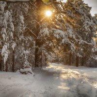 Зимнее утро :: valeri