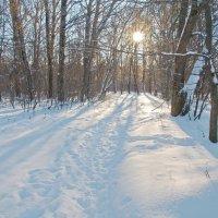 Мороз и солнце-день чудесный! :: Виктор Евстратов