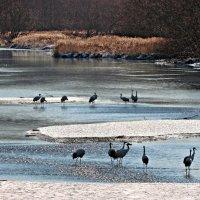 Национальный парк Акан :: Tatiana Belyatskaya