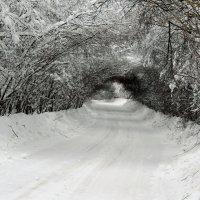 Тоннель в сказочный лес :: Майкл