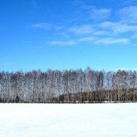 Берёзы среди заснеженного поля. :: Борис Митрохин