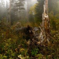 Осень туманная :: Александр Плеханов