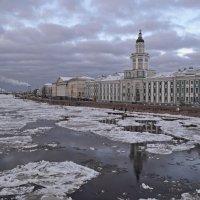 Университетская набережная :: Наталья Левина