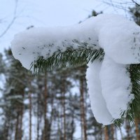 Творчество снегопада :: Милешкин Владимир Алексеевич