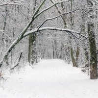 Наклонившись от снега :: Юрий Стародубцев