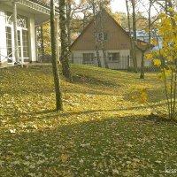 Осень в Светлогорске.. :: Elena N