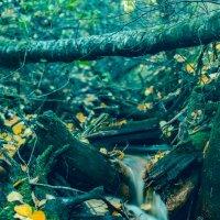 Лесной ручеёк :: Дмитрий Стёпин