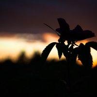 Силуэты заката :: Виктория Шумихина