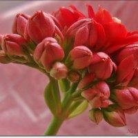 Зарождение цветочка :: Лидия (naum.lidiya)