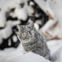 Первый вкус зимы :: Анна Никонорова