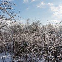 Разная зима :: Сергей Форос