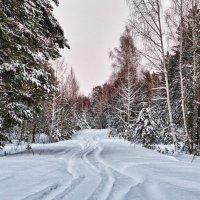 После снегопада.... :: Светлана Игнатьева
