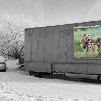 Они хотят домой!!! :: Александр Ковальчук