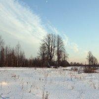 Зимняя липа. :: Андрей Вычегодский
