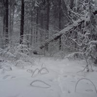 После Большого снегопада в Лосином острове :: Андрей Лукьянов