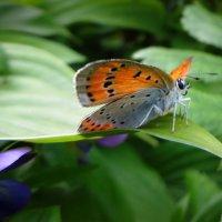 Природы нежное созданье готовит крылышки в полёт... :: Елена Ярова