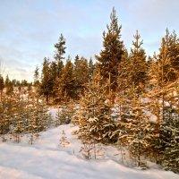 прекрасен зимний день :: Елена