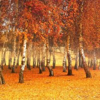 Янтарная осень :: Cергей Дмитриев