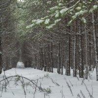Зимний лес :: Сергей Корнев