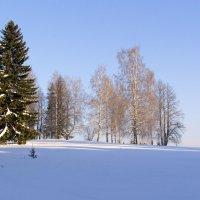 Зимний лес 4 :: Иван .