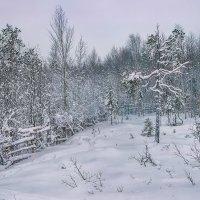 Зимние кружева :: Игорь Чубаров