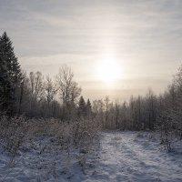 Мороз и солнце :: Олег Пученков