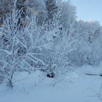 Одежды зимние всем в пору...))) :: Владимир Звягин