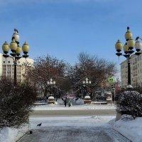 Центральная аллея на проспекте Ленина. :: Пётр Сесекин