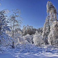 Снег  и  солнце. :: Валера39 Василевский.