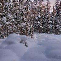 Зимний лес :: vladimir Bormotov