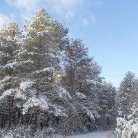 На прогулку приглашает зимний лес... :: BoxerMak Mak