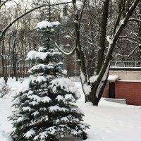 Зима - 2016 год :: imants_leopolds žīgurs