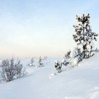 Северодвинск. У Белого моря. Чистота :: Владимир Шибинский