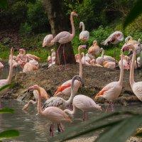 Фламинго :: Георгий Вапштейн