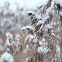 Снег идёт :: Андрей