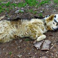 - Ну и где ты, пёс, шлялся до обеда?! :: Сергей Чиняев
