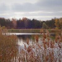 Октябрь...Красив своей особой...Пронзительно-отважной красотой... :: Елена Ярова