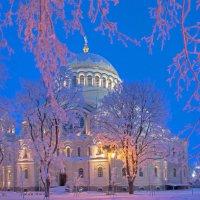 Цвета зимы :: Владимир Шутов
