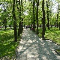 В  Дрогобыче :: Андрей  Васильевич Коляскин